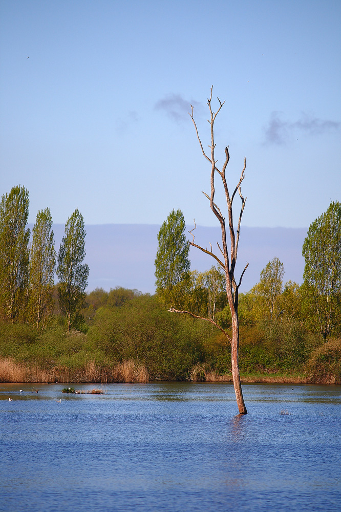 Le parc naturel de la Brenne (3) � digitalkunstfotograf